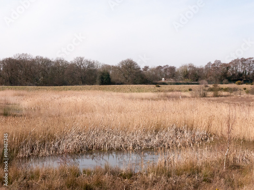Foto op Aluminium Zalm close up view of lake golden reeds nature landscape reserve