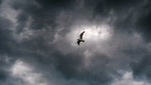 Seagul Under Angry Skies