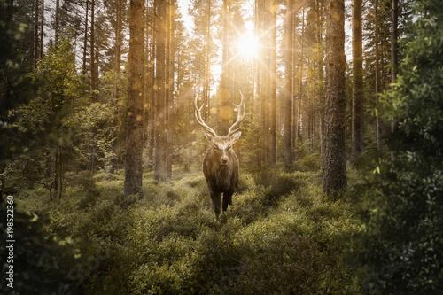 Foto auf Leinwand Hirsch Hirsch im Wald