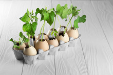 Sprouted Shoots Of Plants In The Eggshell On Wooden Background. Eggs In Recycle Kraft Package.