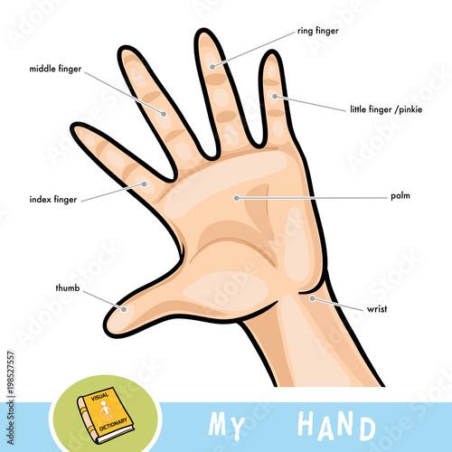 Hand Englisch