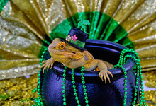Bearded Dragon In Pot Of Gold
