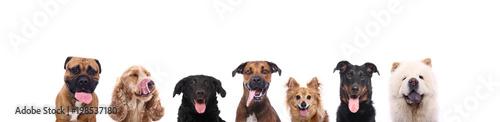 Spoed Foto op Canvas Hond Beautiful dogs