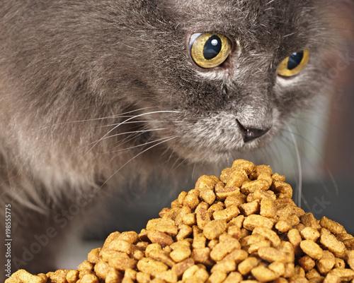 2b7e0971b7a28d gray cat over a heap of a forage, selective focus - Buy this stock ...