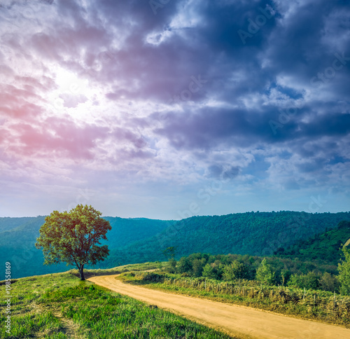 Spoed Foto op Canvas Nachtblauw Landscape in nature of sky with cloudy and roadway through forest.