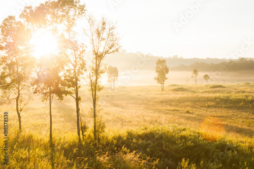 Fotobehang Bomen Golden sunrise shines down around the grassland and wild tree.