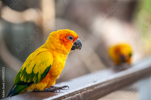 Valokuva colorful parrot on timber