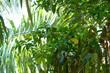 Green jungle of Costa rica