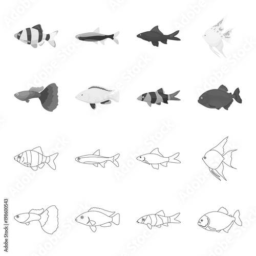 Botia, clown, piranha, cichlid, hummingbird, guppy,Fish set collection icons in outline,monochrome style vector symbol stock illustration web Wallpaper Mural