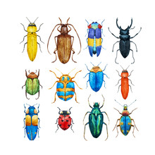 Watercolor Beetles Vector Set