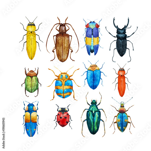 Slika na platnu Watercolor beetles vector set