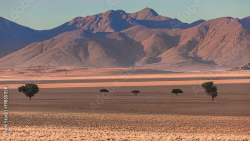Foto op Canvas Zalm Namib rand reserve landscape with shadows around sand and acacia trees
