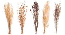 Dry Color Grass Flower For Interior Decoration. Studio Shot And Isolated On White