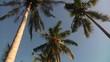 Bali Palm Trees 3