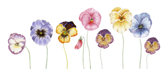 NaklejkaWatercolor pansy flowers