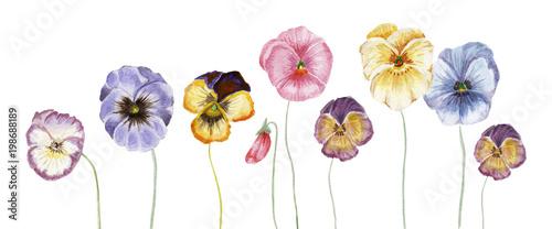 Fotografía  Watercolor pansy flowers