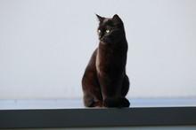 Un Chat Noir Sur Un Mur