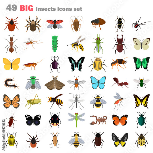 Fotografia Big insects color flat icons set