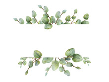 Watercolour Green Eucalyptus Banner On White Background.