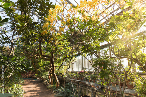 Foto  Tropical greenhouse with evergreen flowering plants, twisting trees on sunny day with beautiful light and sun rays