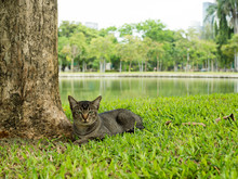 Black Cat Lying On Grass Under Big Tree Near River In Natural Park.