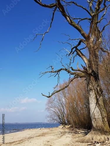 Fotografia  suche drzewo