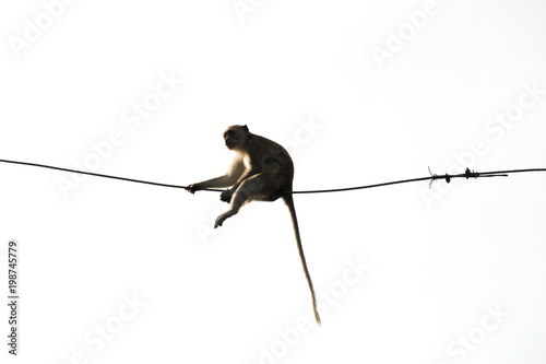 Monkey sitting on the wires safe and comfortable