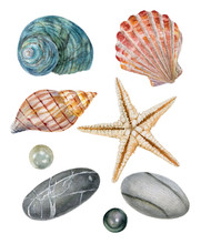 Watercolor Set Of Isolated Objects Sea Shells, Starfish, Stones, Pearls