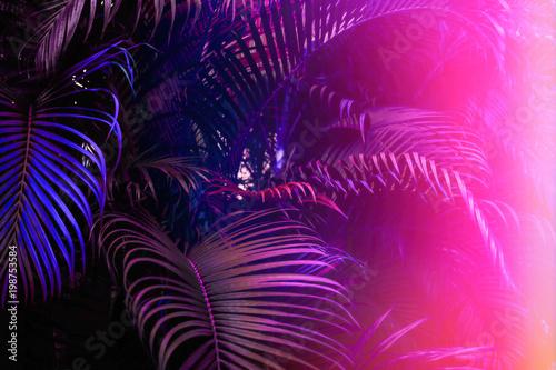 Deep dark purple palm leaves pattern with bright pink gradient effect, sun leak. Creative toned layout, horizontal