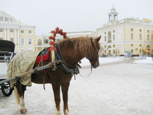 Horse Carriage On Winter Season Landscape In St. Petersburg, Russia. Beautiful Single Horse Animal In Harness On City Street Turning And Looking Away From People. Outdoor Image With Tired Horse.