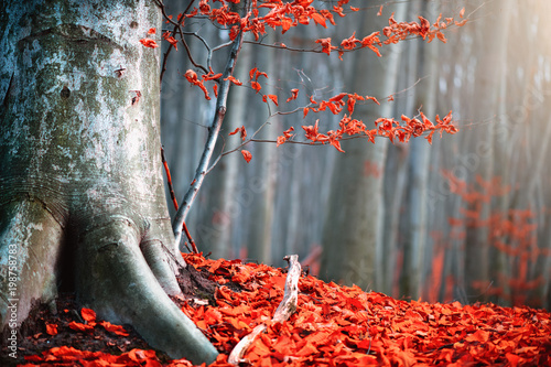 Fotobehang Grijs Autumn nature scene. Fantasy fall landscape. Beautiful autumnal park with bright red leaves and old trees