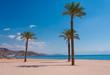 Egypt. Red sea day. Beach, sea, palms