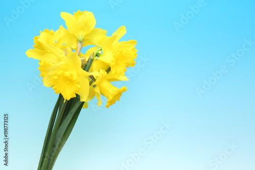 Deurstickers Narcis 水仙