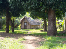 Wood Hut Home Local Village On Tanna Island, Vanuatu