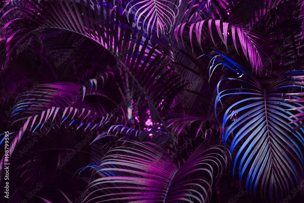 Fototapety, obrazy: Vivid purple palm leaves pattern.  Blue gradient colored filter. Creative layout, toned, horizontal
