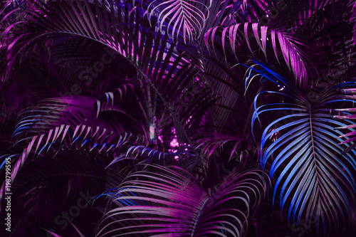 Vivid purple palm leaves pattern Tapéta, Fotótapéta