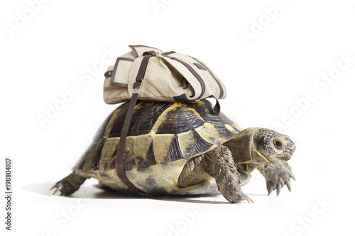 Poster Tortue Turtle with backpack on a back. Isolated on white