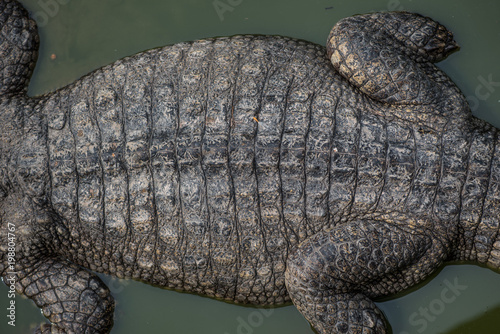 Foto op Plexiglas Krokodil Close-up of Dark brown crocodile leather for background and texture