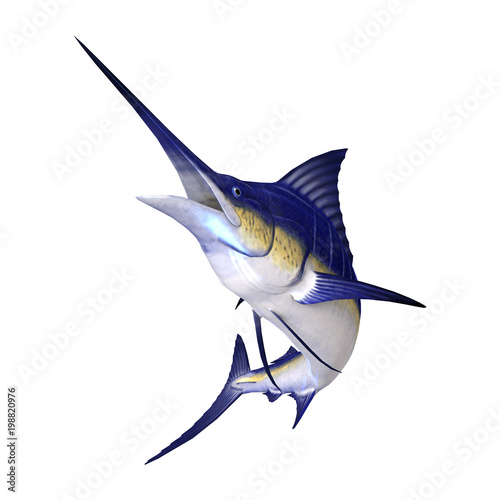 Photo  3D Rendering Marlin Fish on White