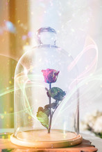 A Enchanted Rose In The Glass ...