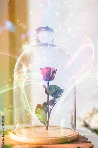 A enchanted rose in the glass covering. Tableau sur Toile