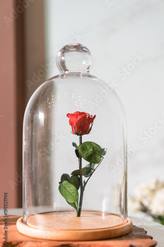 Photographie A enchanted rose in the glass covering.
