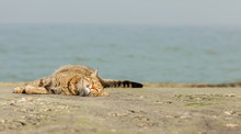 Funny Grey Cat On The Beach Ag...