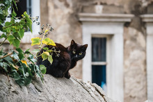 Cute Black Cat Sitting On The ...