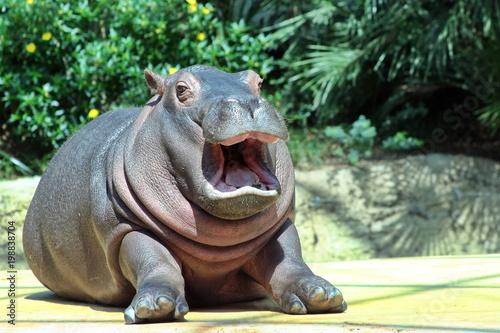 Valokuva hippo