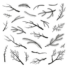 Set Of Hand Drawn Twigs And Branches.