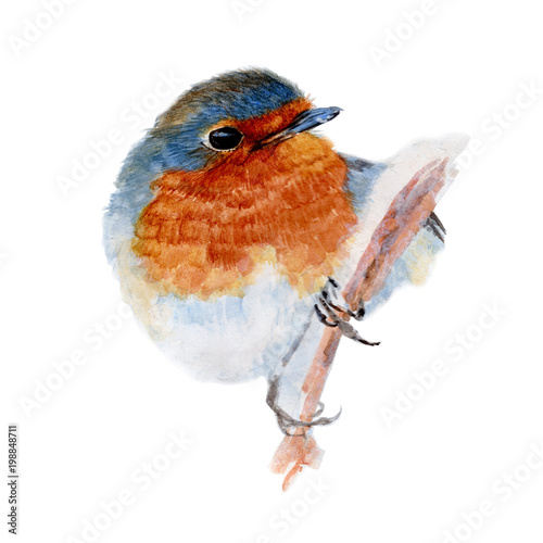 recznie-malowany-rudzik-na-galezi-akwarela