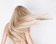 canvas print picture - Healthy long platinum blonde hair in motion.