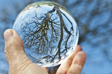 Crystal Ball Sphere Reveals Ancient Tree/Close Up View Of Ancient Maple Tree In Crystal Ball With Blue Sky