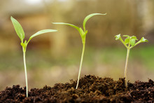 Young Plants In The Soil